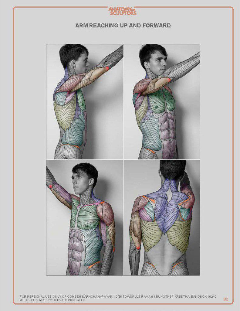 Pin de Manolmedo en Anatomía | Pinterest | Anatomía