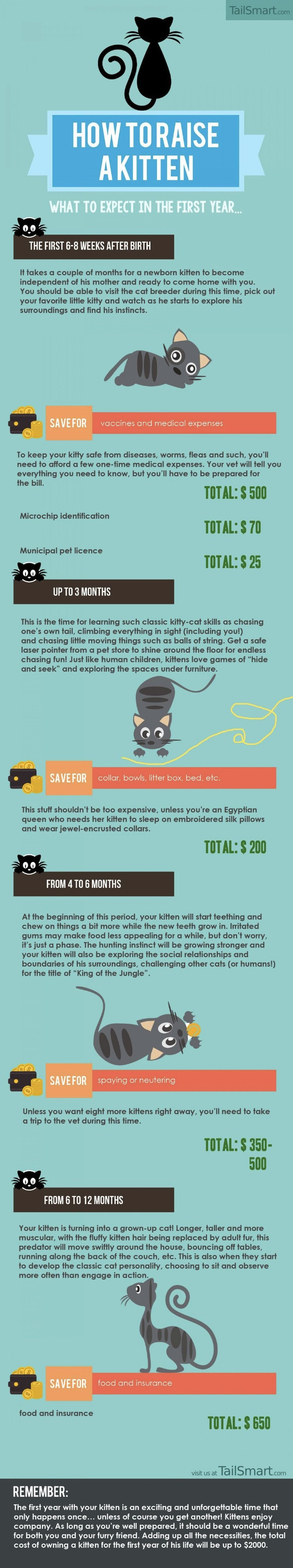 Infographic How To Raise A Kitten DesignTAXI