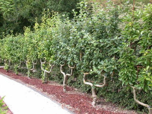 petit arbre fruitier jardin recherche google jardin. Black Bedroom Furniture Sets. Home Design Ideas