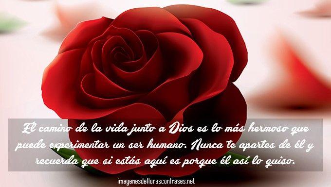Imágenes De Rosas Con Reflexiones Cristianas Imagenes De Flores