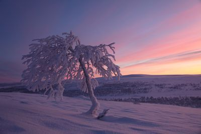 Polar Night is more than just a blue twilight ... Kaamos on muutakin kuin sininen hämärä... Photo by Antero Isola