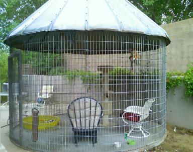 Round catio  Possible made from cattle panels with a silo
