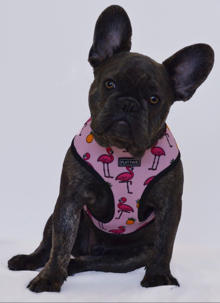 Flat Face Reversible Harness Make Sure Your Pampered Pooch Stands