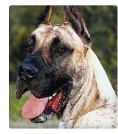 Slideshow The Best Dog Breed For Your Health And Personality