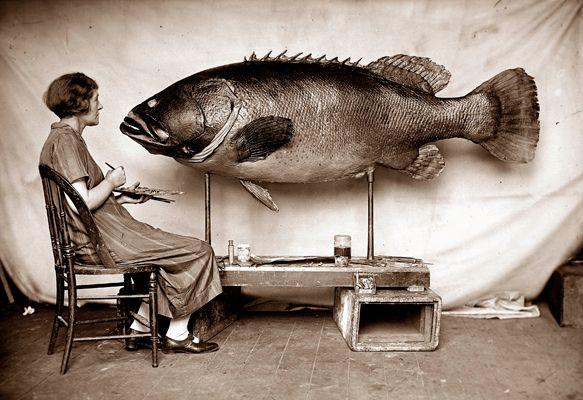 Fish, Ethel King & Queensland Groper specimen, 1926. Courtesy Australian Museum Archives.