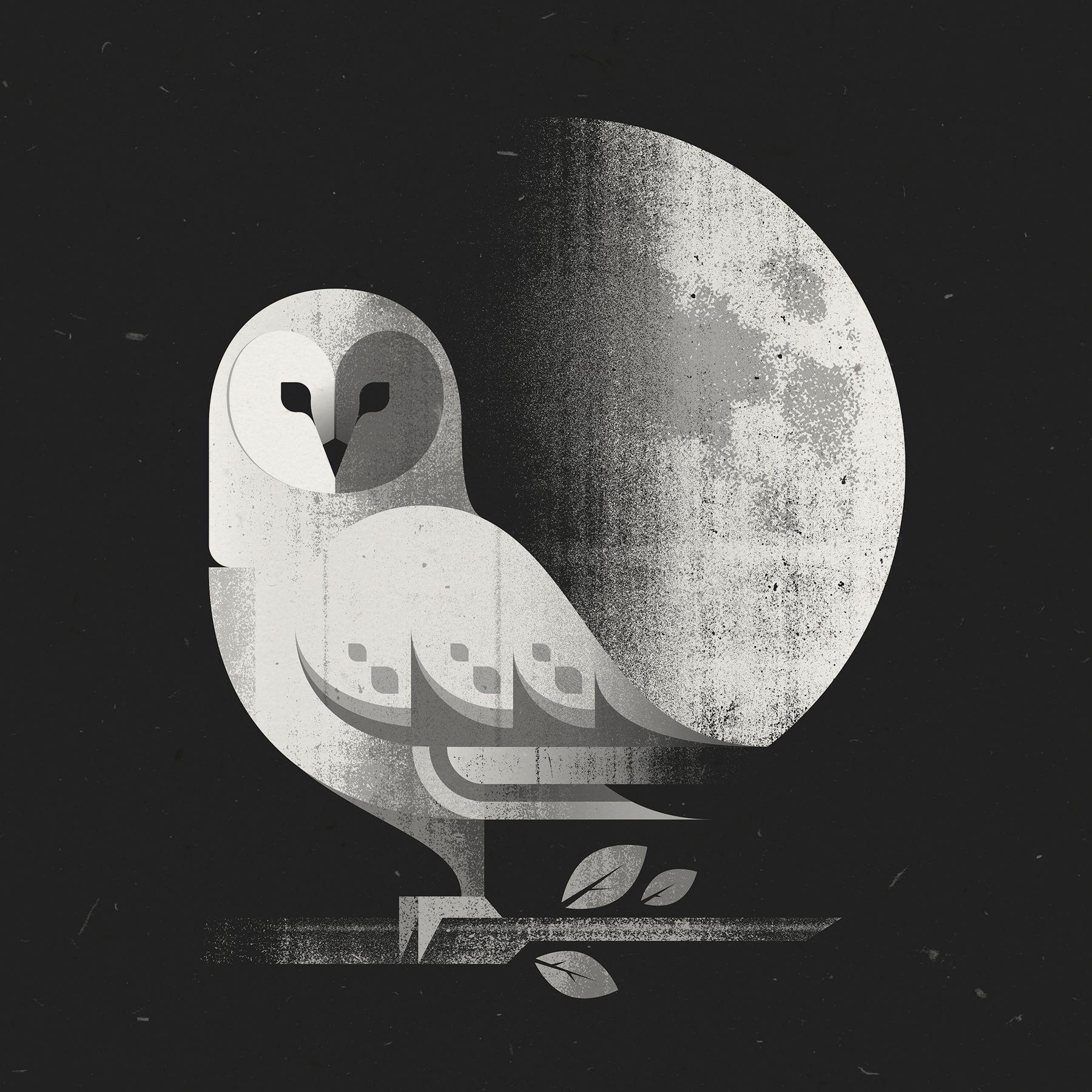 barn_owl_final.jpg   Bird illustration, Owl print, Owl