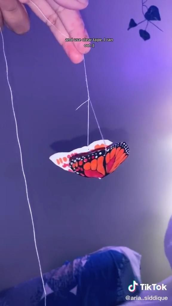 Photo of butterfly decor