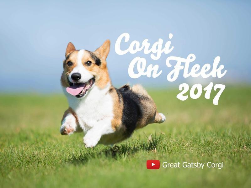 cf38102e9 Image result for corgi other cats jpg 800x600 Gatsby smiling corgi