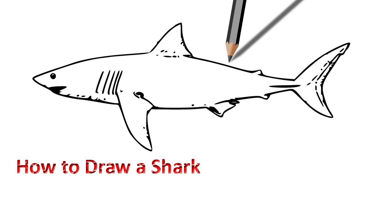Uncategorized Drawing Of Sharks how to draw a shark easy drawing pinterest drawing
