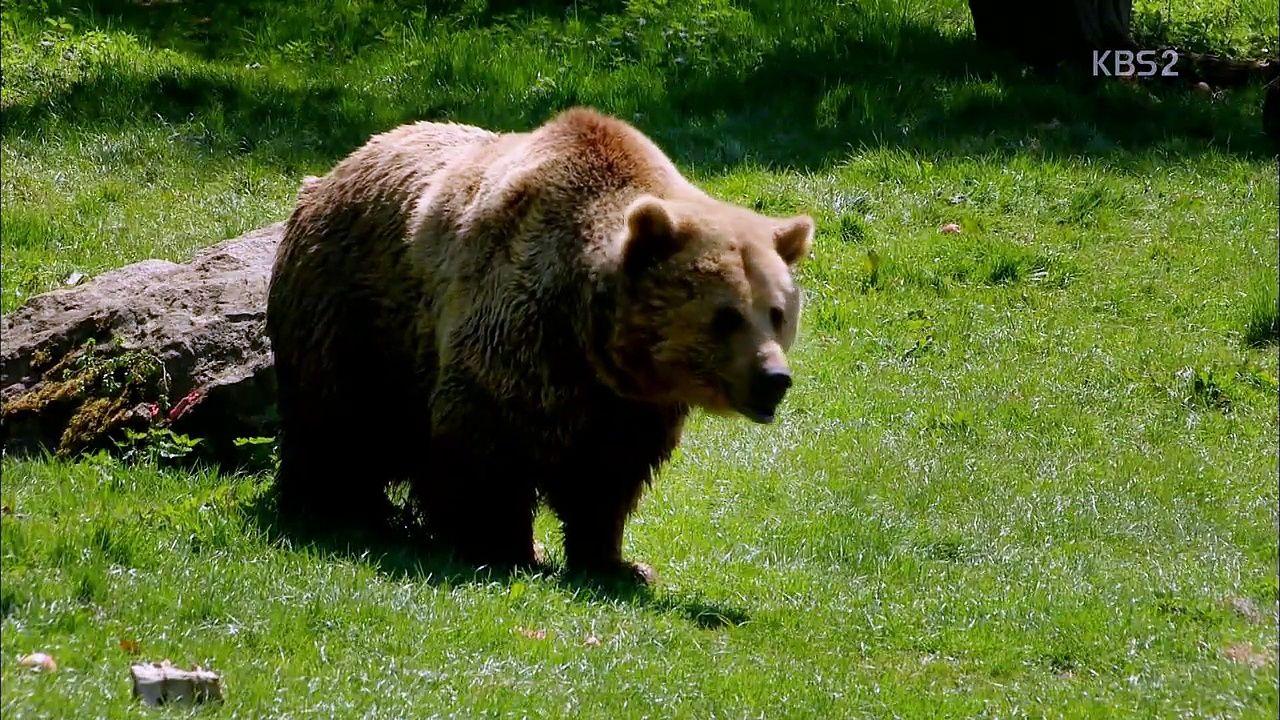 동물의 세계 - 동물원 이야기, 휩스네이드 동물원의 24시간(1) 9월 15일 (화) - http://heymid.com/%eb%8f%99%eb%ac%bc%ec%9d%98-%ec%84%b8%ea%b3%84-%eb%8f%99%eb%ac%bc%ec%9b%90-%ec%9d%b4%ec%95%bc%ea%b8%b0-%ed%9c%a9%ec%8a%a4%eb%84%a4%ec%9d%b4%eb%93%9c-%eb%8f%99%eb%ac%bc%ec%9b%90%ec%9d%98-24%ec%8b%9c/