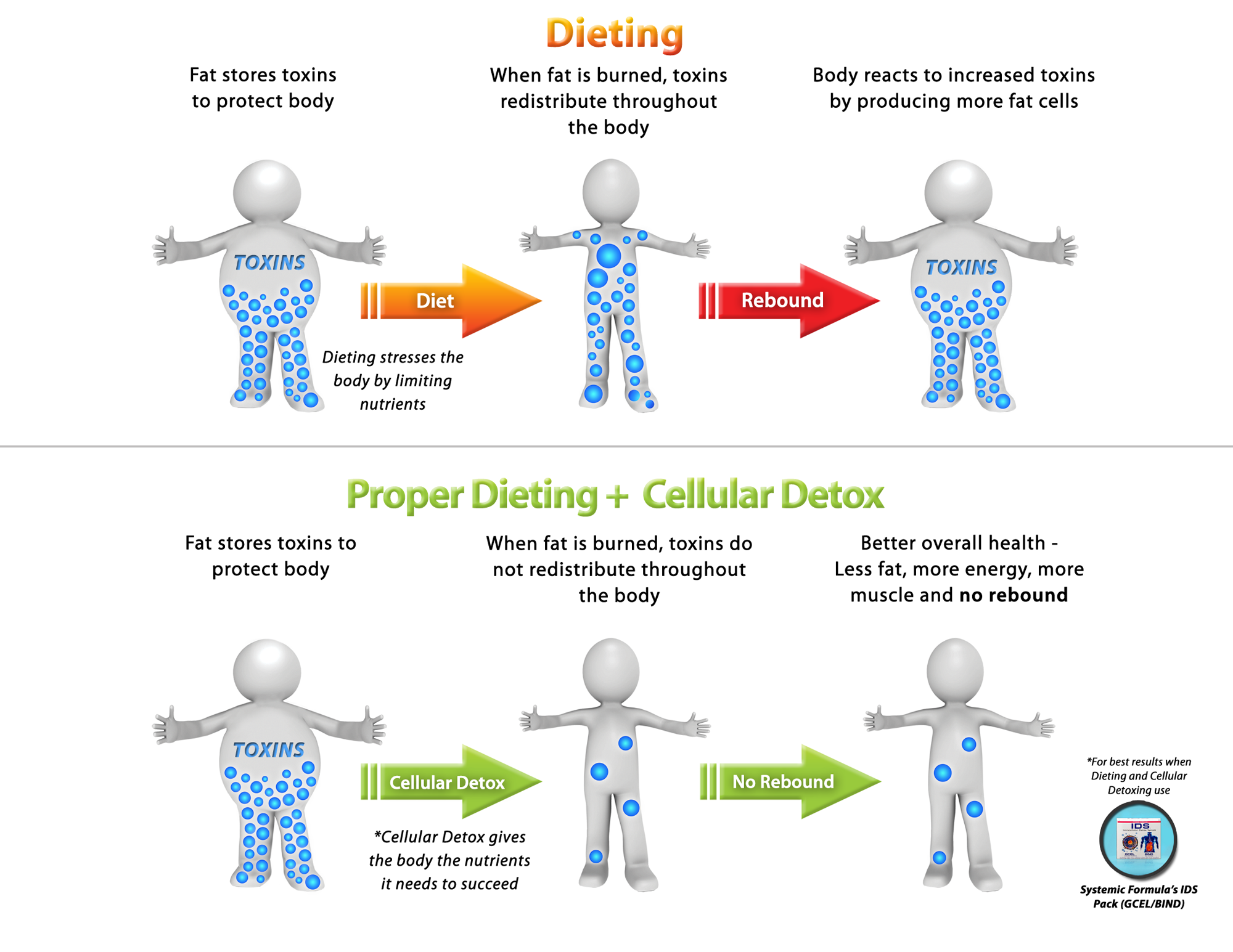 image and explanation of the dieting and detox diagram how to lose toxic fat for good [ 2000 x 1545 Pixel ]