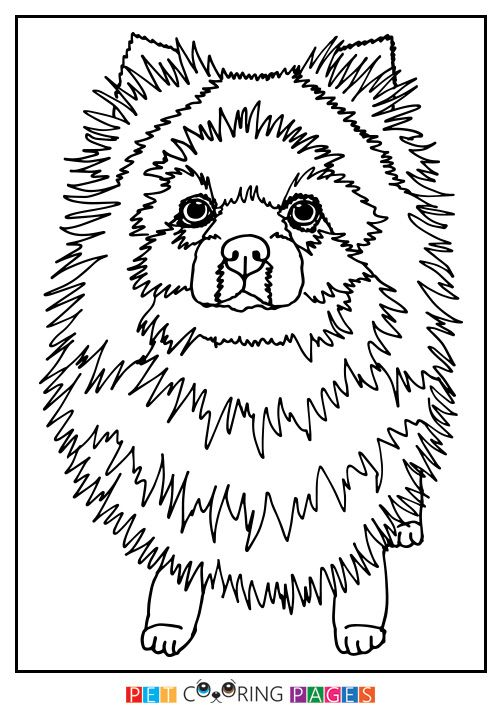 Pomeranian Coloring Page Coloring Pages Color Pomeranian