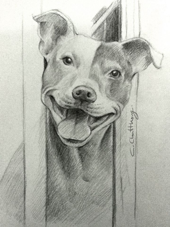 Pitbull drawing by chattravadee peinture dessin chien - Dessin de pitbull ...