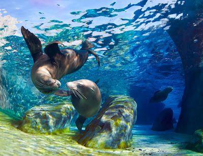 BANCO DE IMÁGENES: 10 fotos del mar azul, playas tropicales, peces de colores, arenas blancas, personas felices, palmeras y vacaciones.