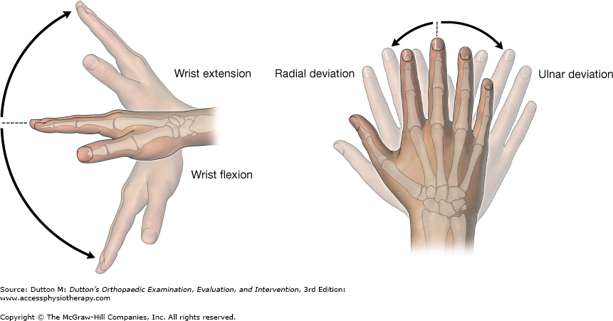 Image result for wrist extension and flexion nerve | Anatomy | Pinterest