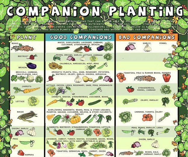Companion Planting Reference Guide 400 x 300