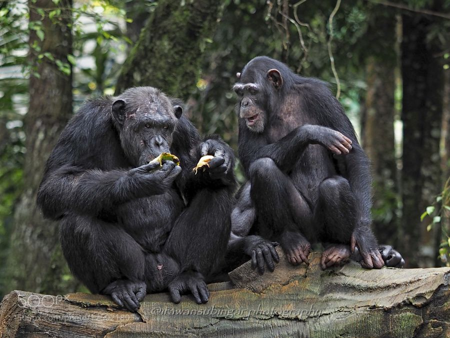 Can i have some ? by Irawan-Subingar via http://ift.tt/2dwztdy