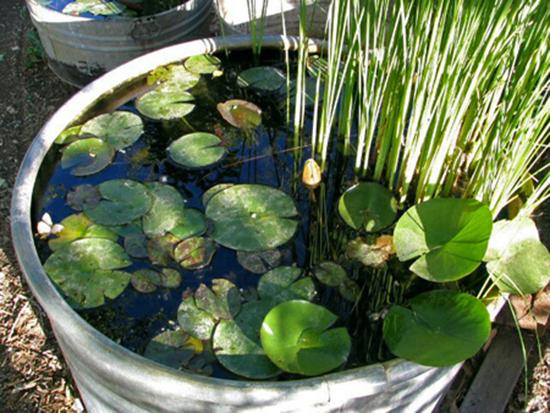 container water gardens sheila zeller interiors container water gardens pinterest. Black Bedroom Furniture Sets. Home Design Ideas