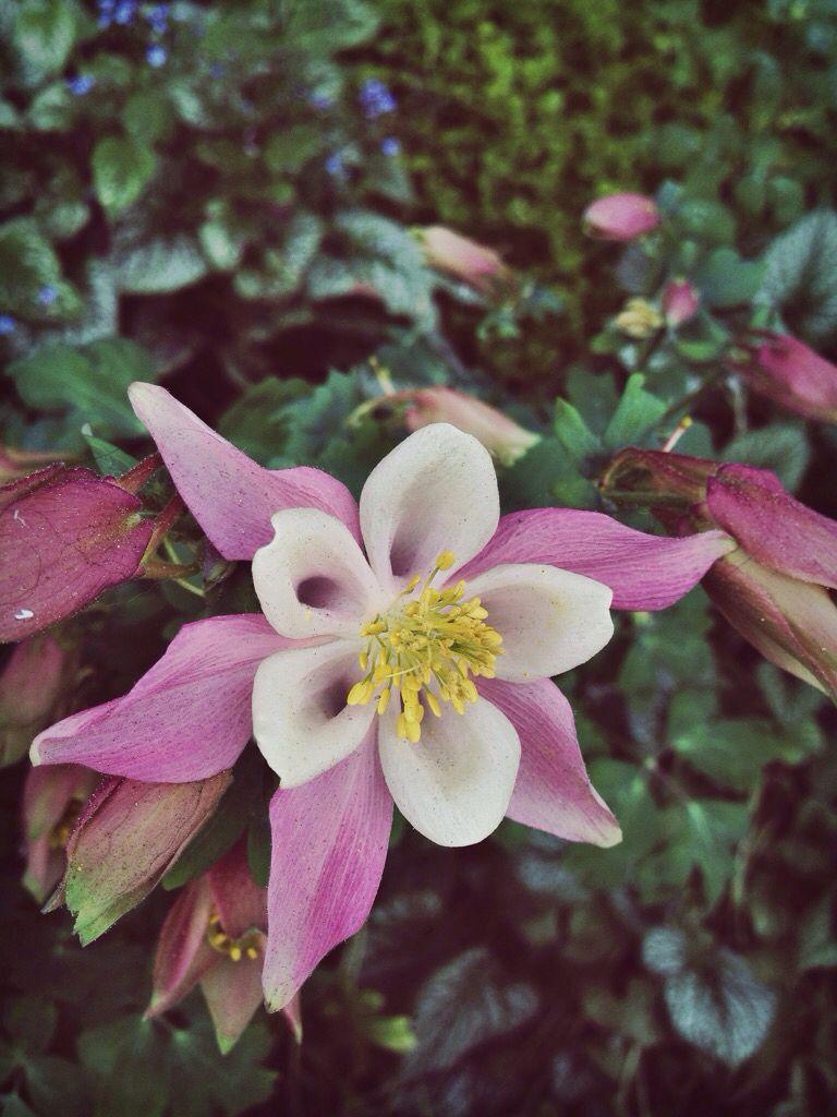 Very Pretty Flower I Saw On My Trip To Denver Creds