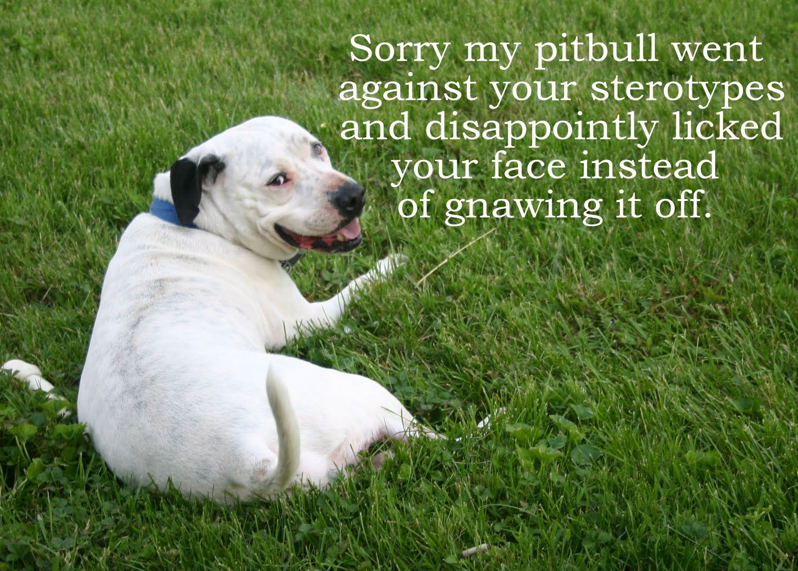 Pin On The Most Miss Understood Dog Pit Bulls