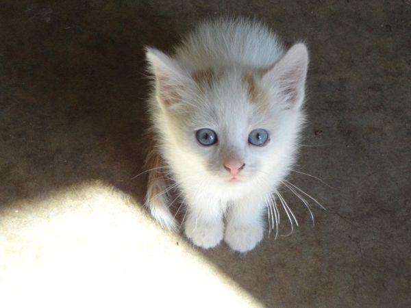 Baby Kitties Baby Cats Cute Animals Animals