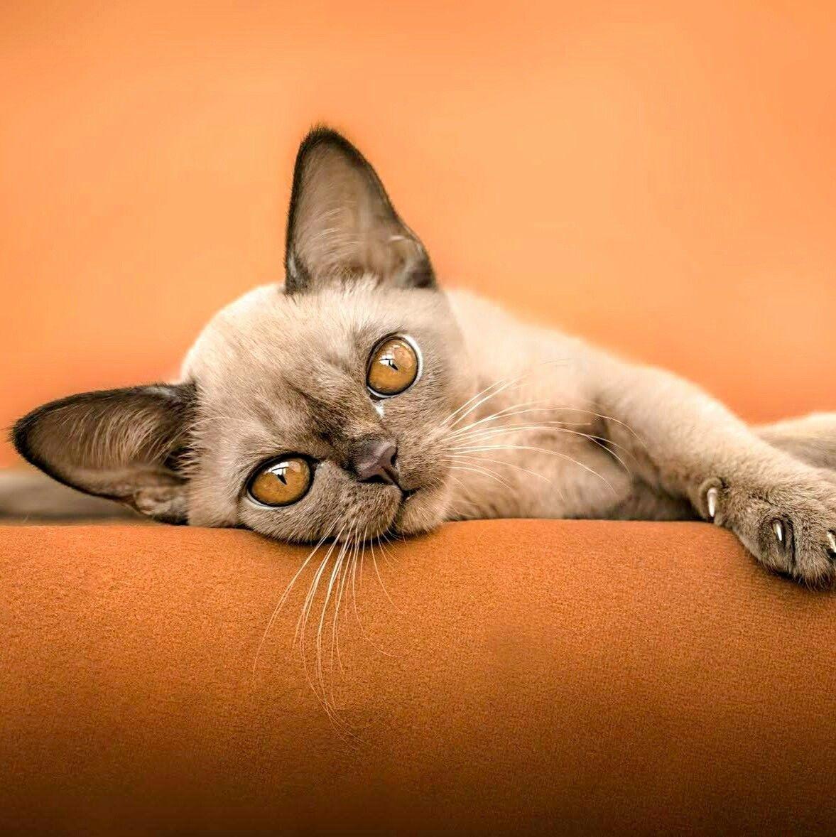 Cats By Nanette Kelley On Kitty Power Pretty Cats Feline