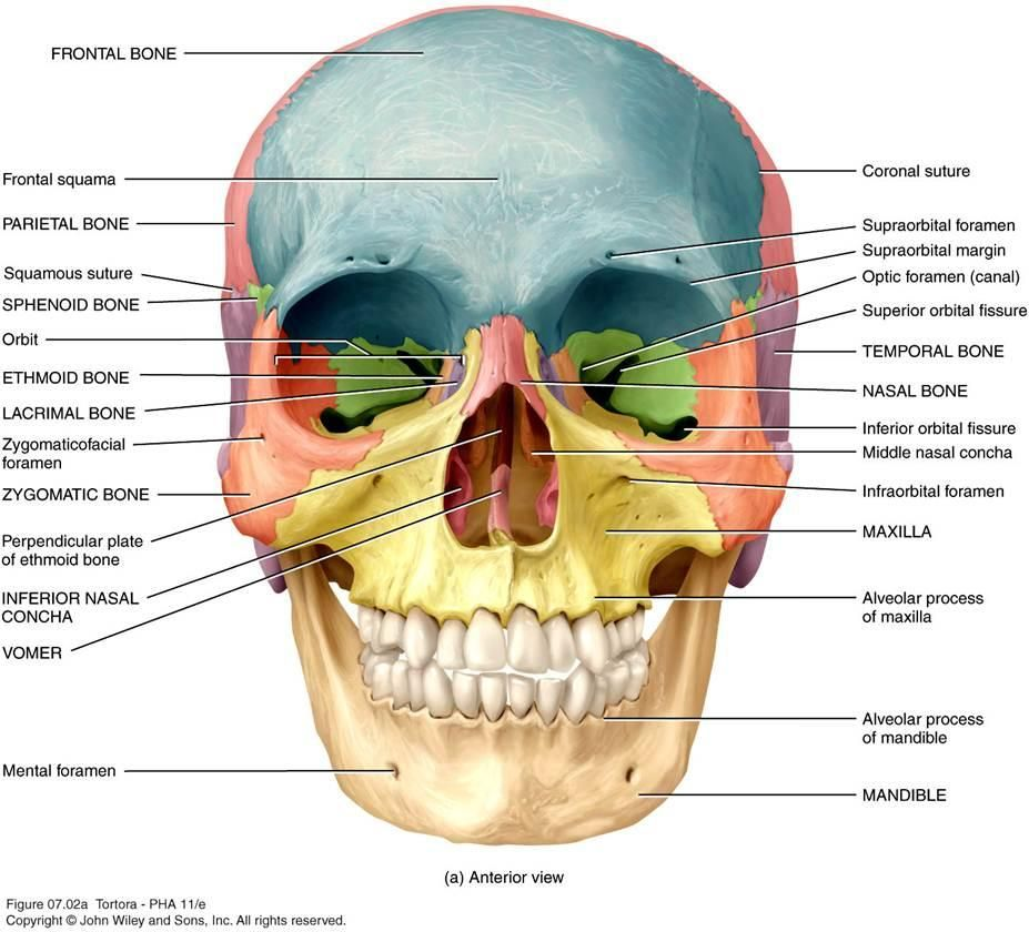 Pin By Chantell Tingey On Anatomy And Physiology For Communication