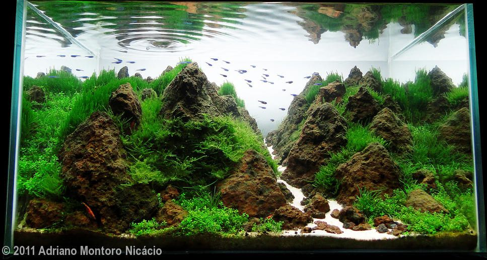2011 AGA Aquascaping Contest - Entry #63 | Planted ...