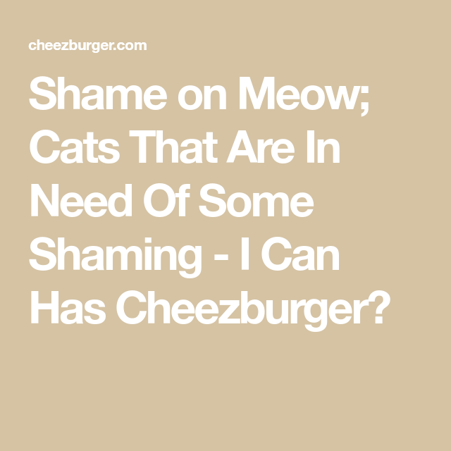 Shame on Meow; Cats That Are In Need Of Some Shaming - I Can…