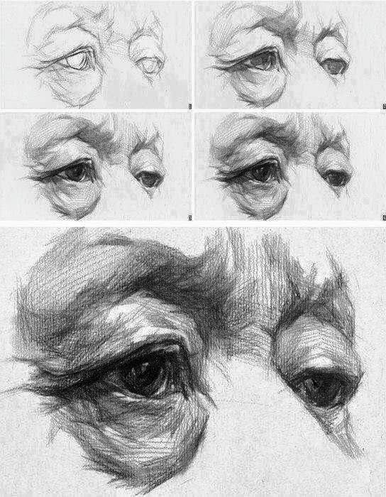 Pin de Виолетта Голдина en рисунок | Pinterest | Anatomía, Dibujo y ...