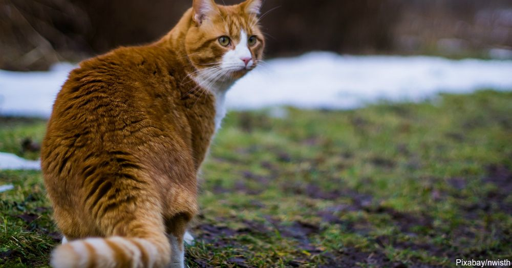 8 Remedies For Dealing With Hairballs in Cats