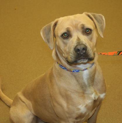 Available Pets At Watauga Humane Society In Boone North Carolina Dog Pounds Pets Humane Society