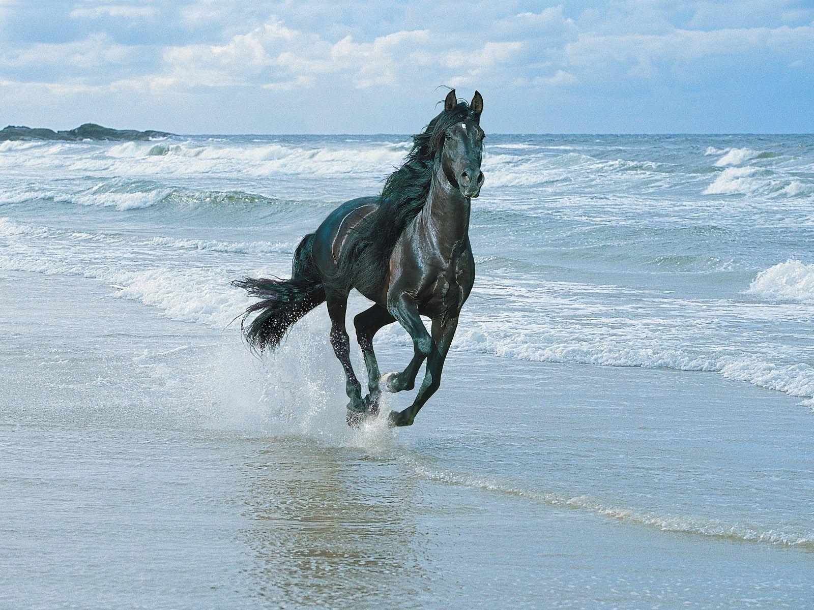 Great Wallpaper Horse Beach - d0b11c752b3a77d89727040ab14dfd0e  Pictures_135785.jpg