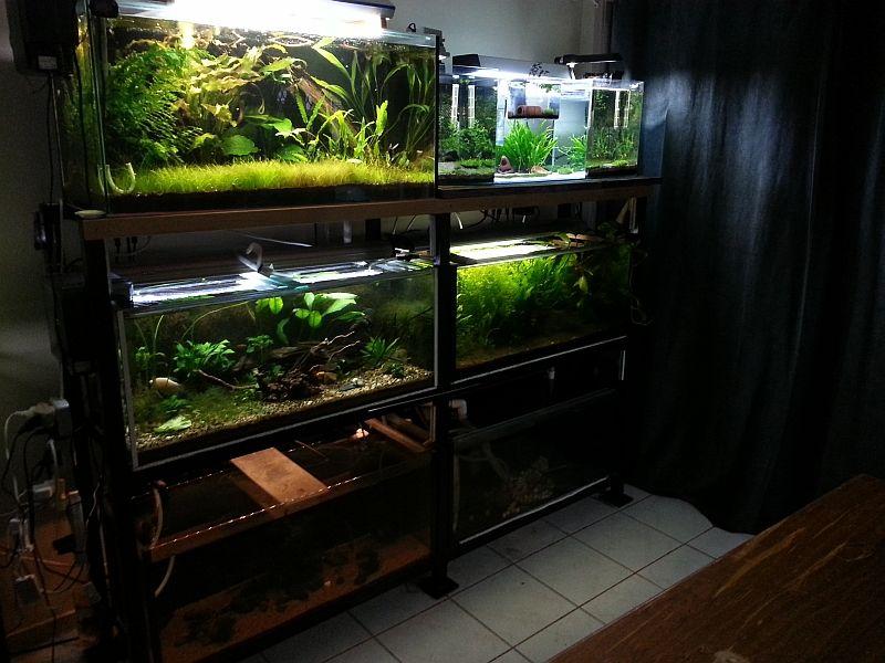 6 Tank Rack Pets Aquarium Stands And Racks Pinterest