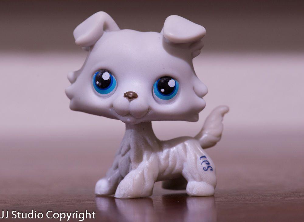 Littlest Pet Shop Lps 363 Grey White Collie Puppy Dog W Blue