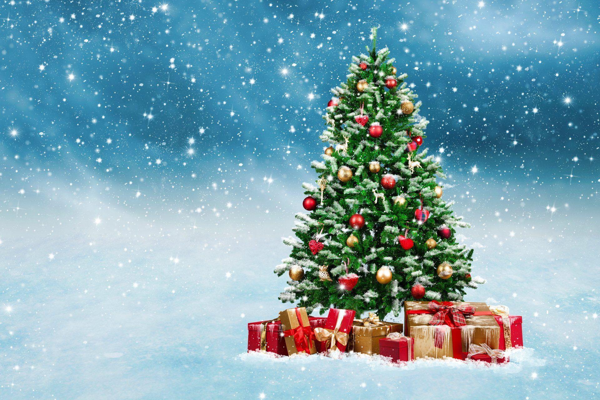 Top 50 hình nền cây thông Noel lung linh sắc màu trong đêm giáng sinh trong  2020 | Cây giáng sinh, Ngày nghỉ, Noel