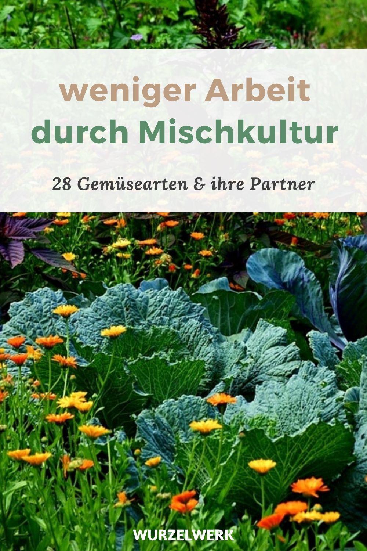 Photo of 28 Gemüsearten und ihre wirksamsten Mischkultur-Partner + Be…