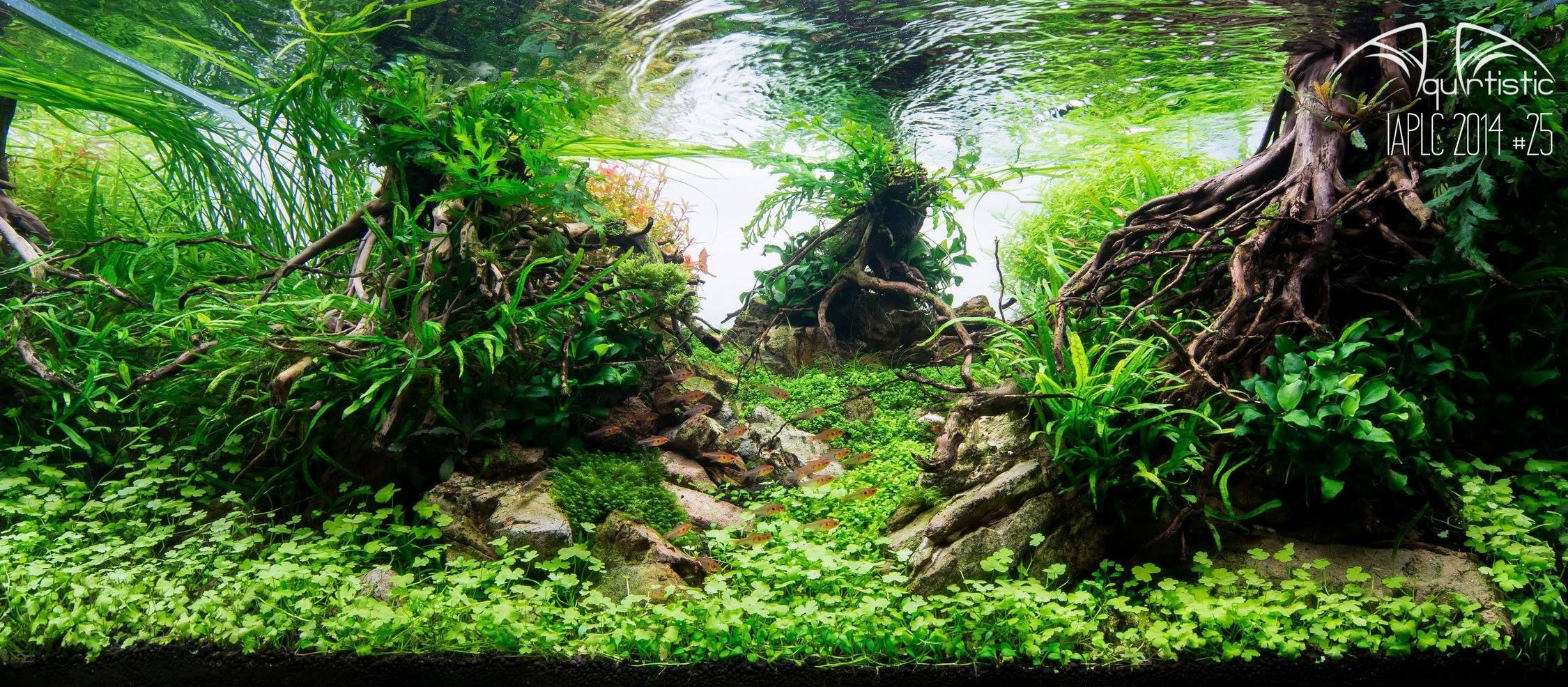 d0b50d49a4324e7a028643367c94c8f7 Frais De Aquarium Tropical Schème