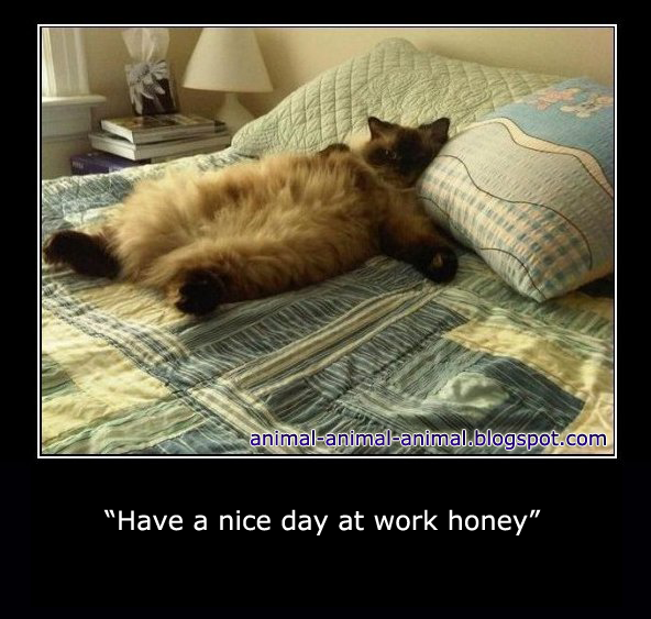 Have A Nice Day At Work Honey Funny Animals Pinterest Animals