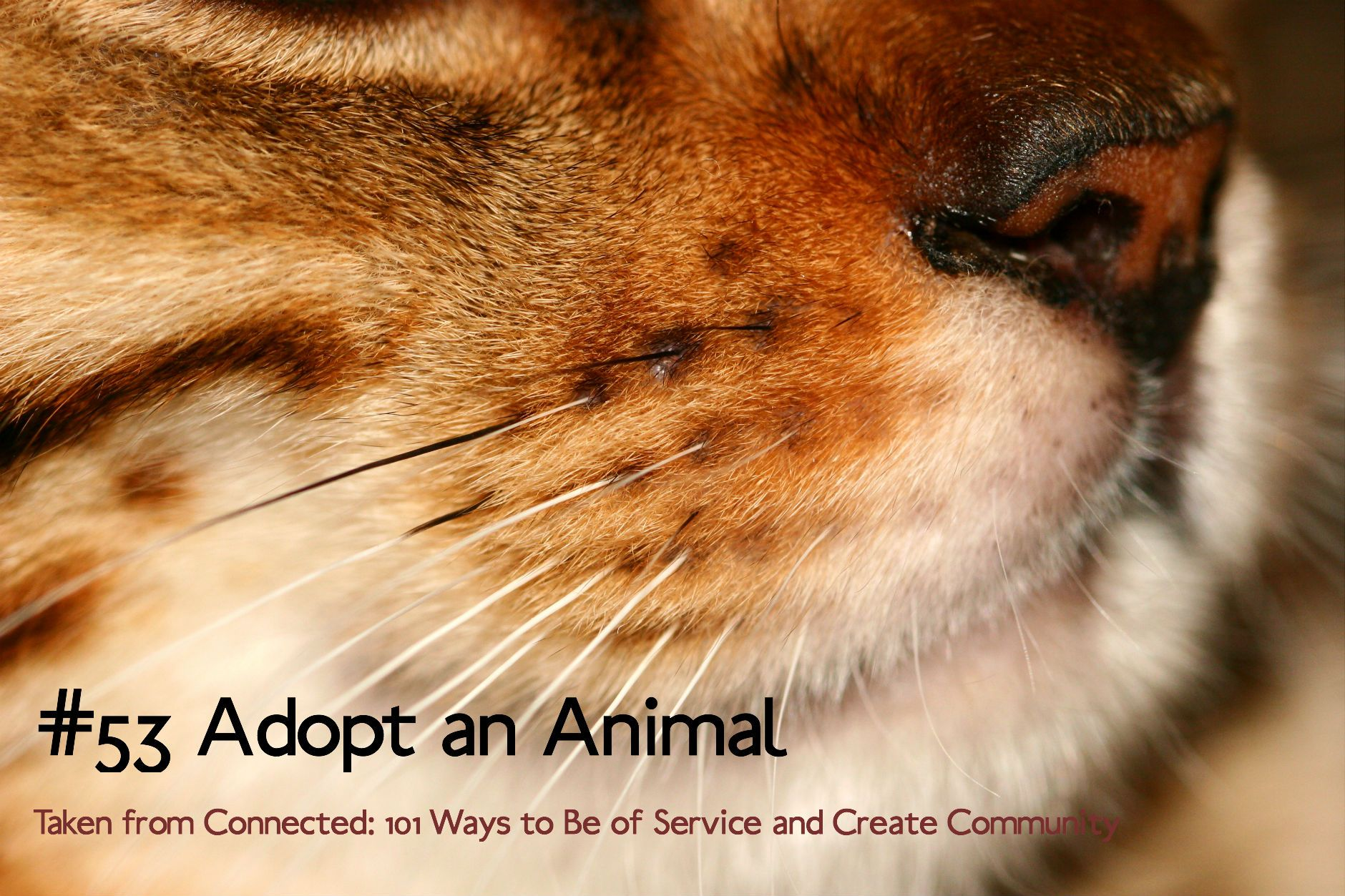 53 Adopt an Animal Cat whiskers, Cats, Homeless pets