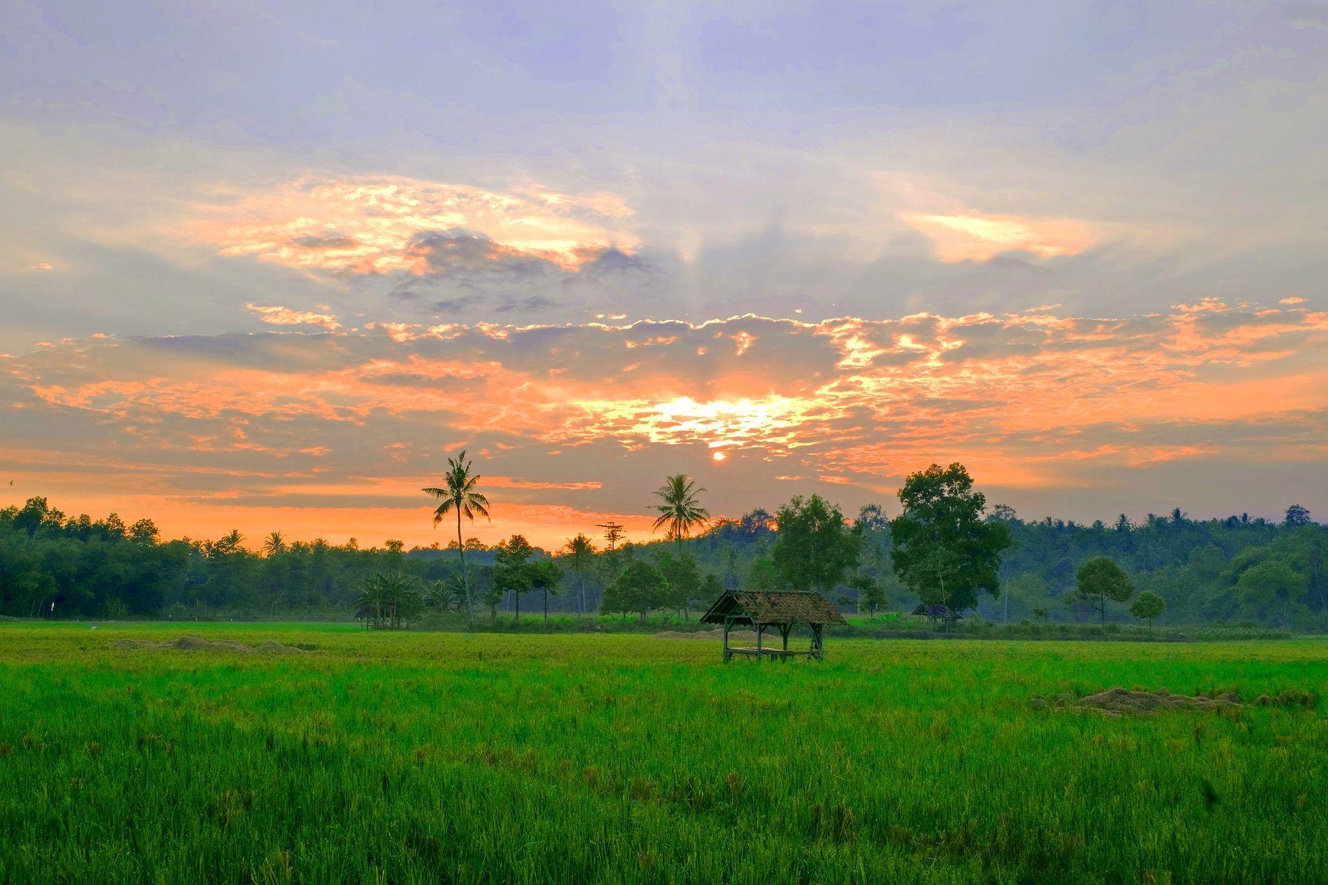 prado, campo, árboles, atardecer, sol, nubes, lampung, indonesia, 1703092329