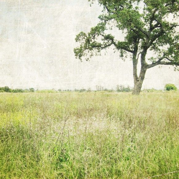 Landscape photography green wall art oak tree in meadow minimal ...