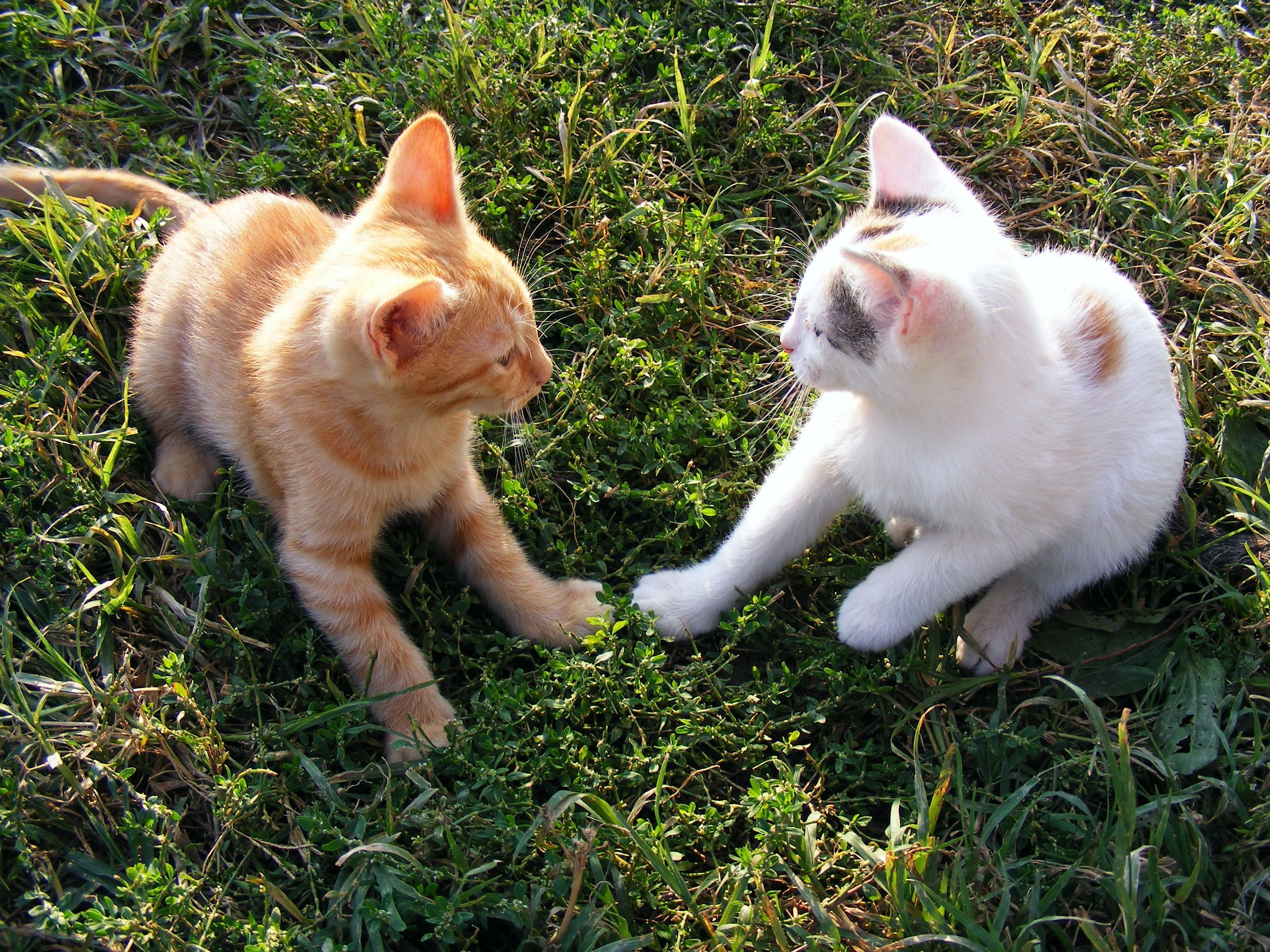 Cute Puppies With Cute Kittens Cute Unicorn Kittens Cute Van Kittens Cute Zombie Kittens Good Names For Cute Kitt With Images Cat Care Kittens Funny Super Cute Kittens