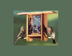 'CHICKADEE' Songbird TEAHOUSE Redwood & Etched Glass Bird Feeder