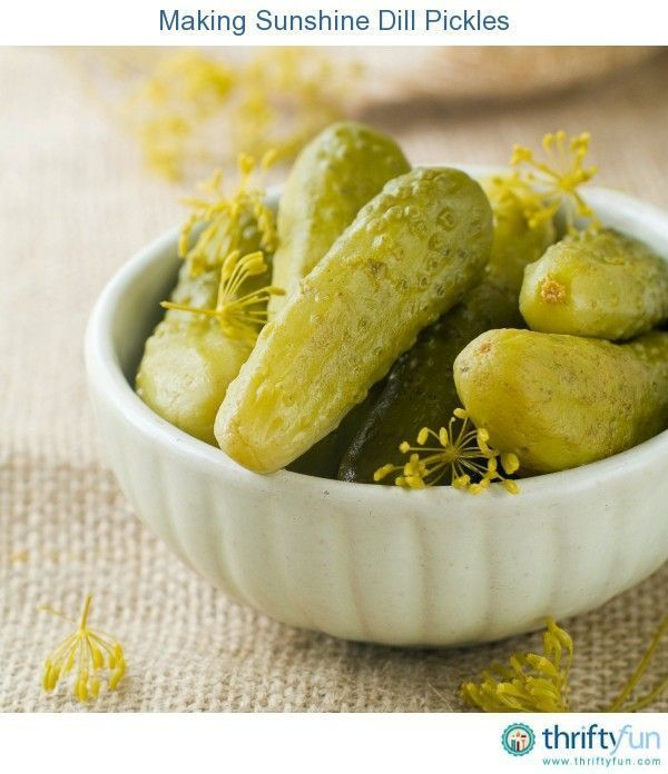 Making Sunshine Dill Pickles #dillpicklesoup This is a guide about making sunshine dill pickles. Sunshine pickles are actually processed by placing the jars in the sun for a number of days. #dillpicklesoup Making Sunshine Dill Pickles #dillpicklesoup This is a guide about making sunshine dill pickles. Sunshine pickles are actually processed by placing the jars in the sun for a number of days. #dillpicklesoup Making Sunshine Dill Pickles #dillpicklesoup This is a guide about making sunshine dill #dillpicklesoup