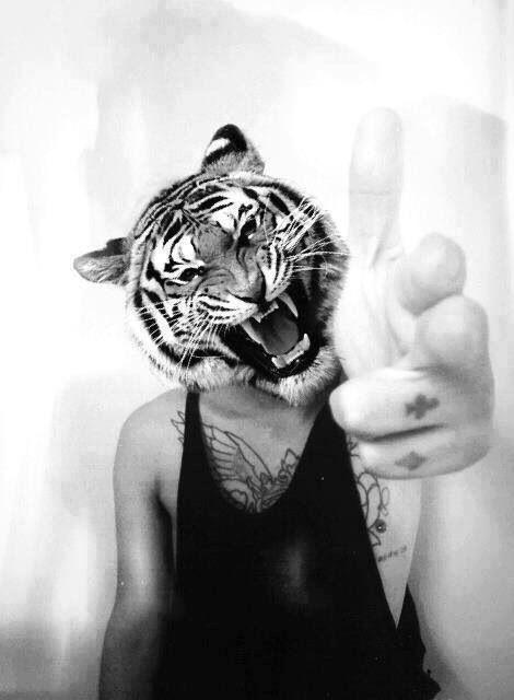 Easy tiger crazy pinterest easy tiger publicscrutiny Images