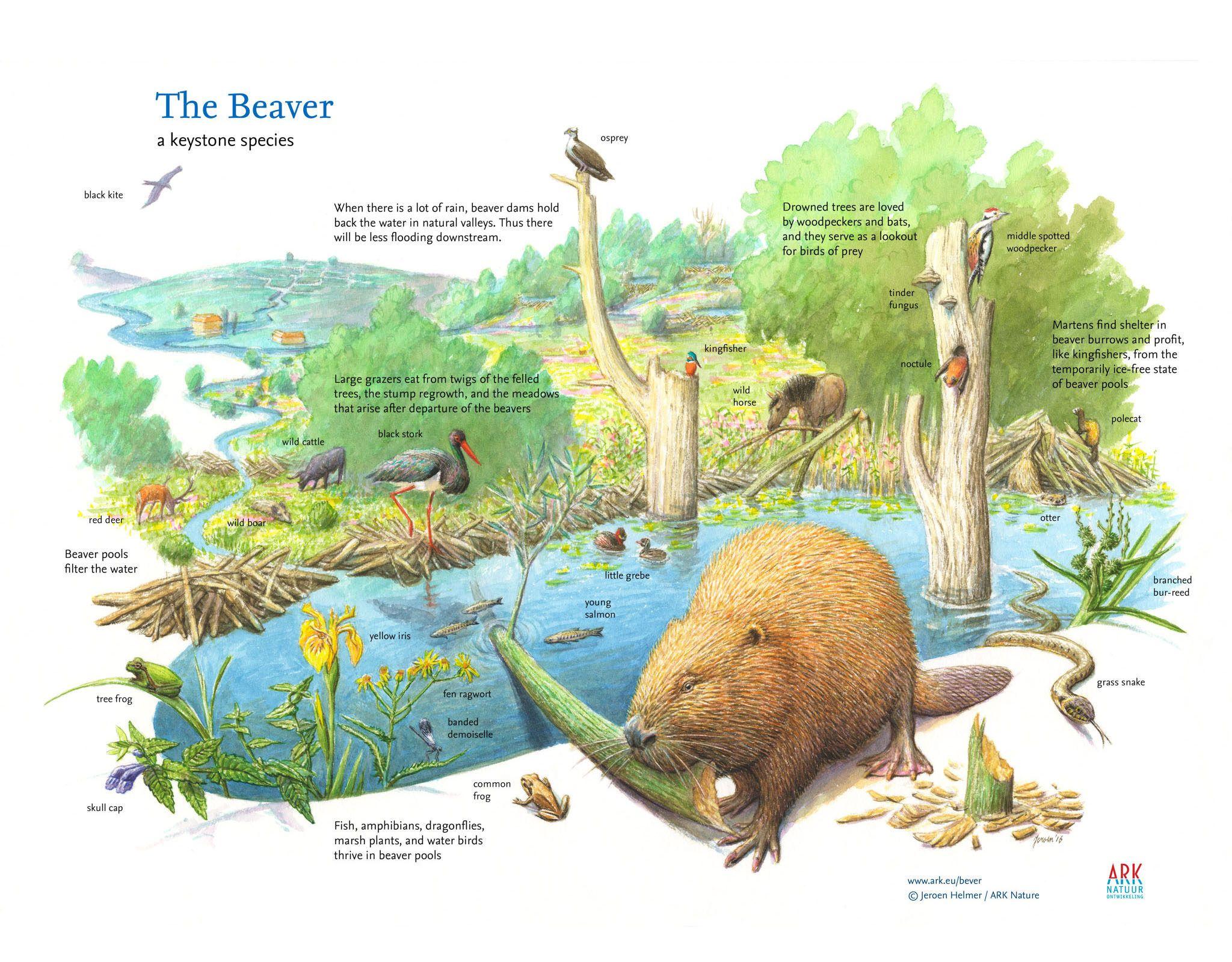 Wilder Nature