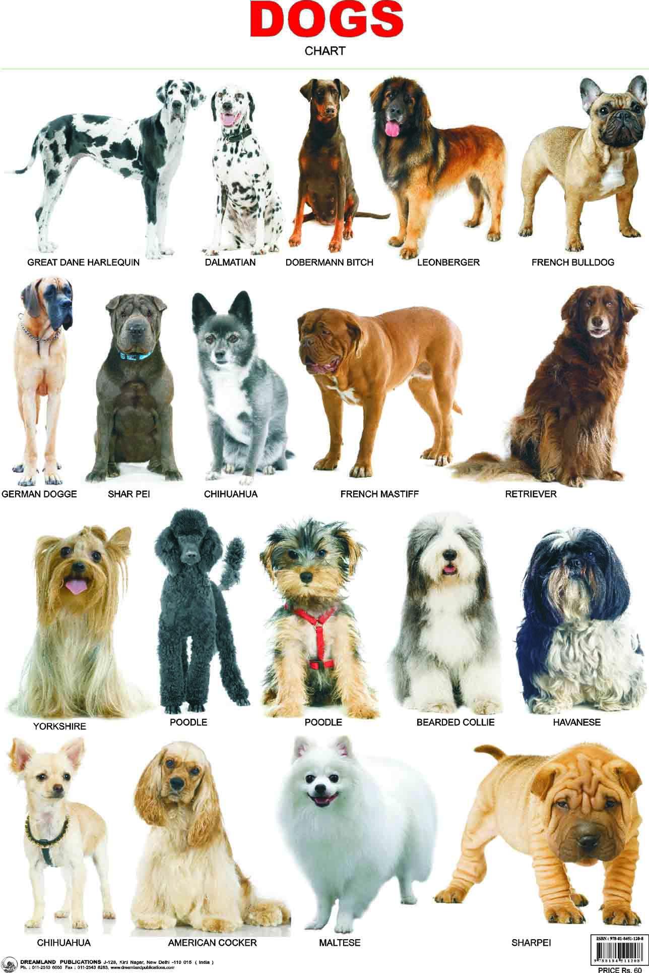 Атлас пород собак с картинками