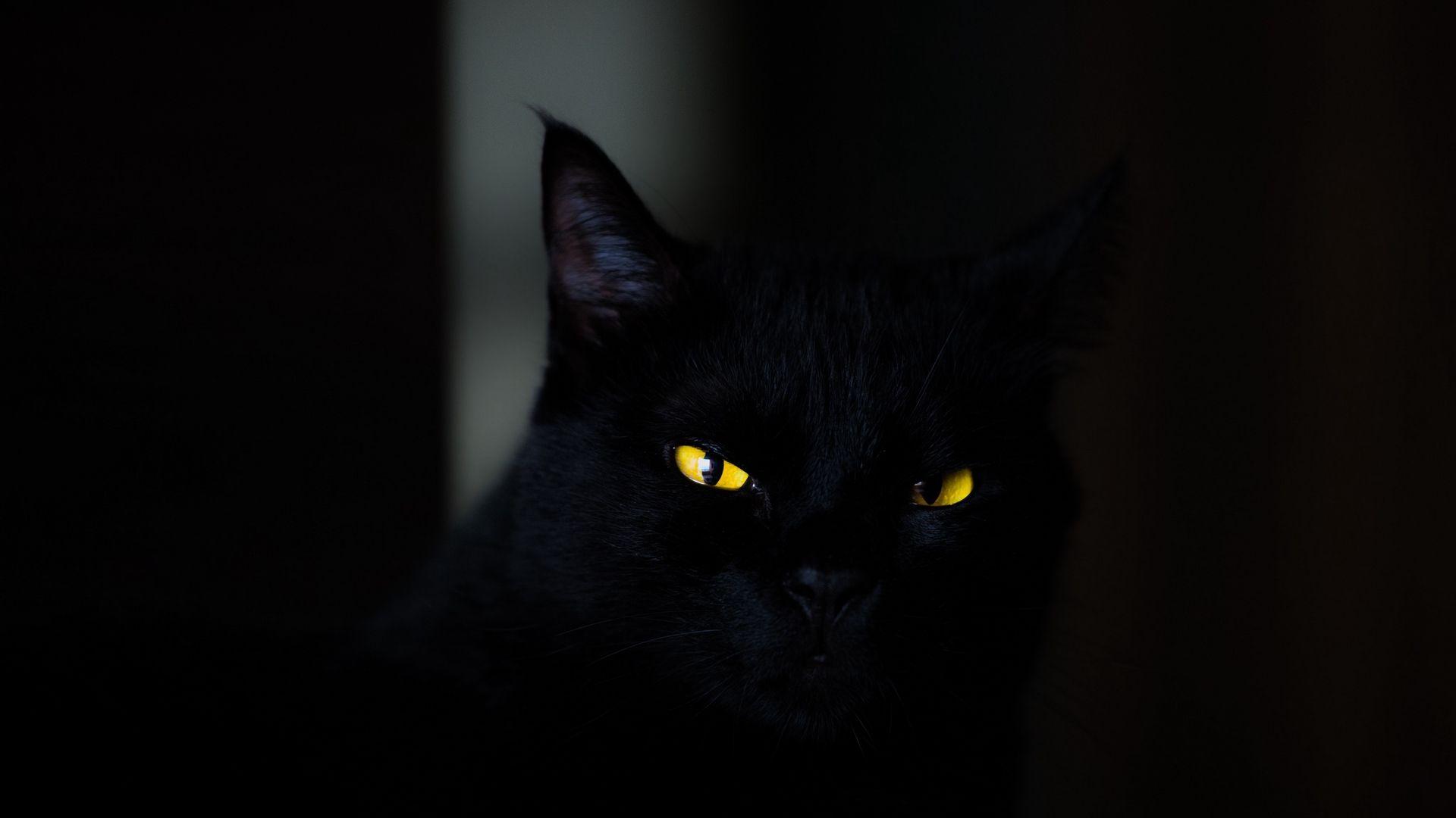 Black Cat 1920x1080 Black Cat Black Aesthetic Wallpaper Black Cats Rock