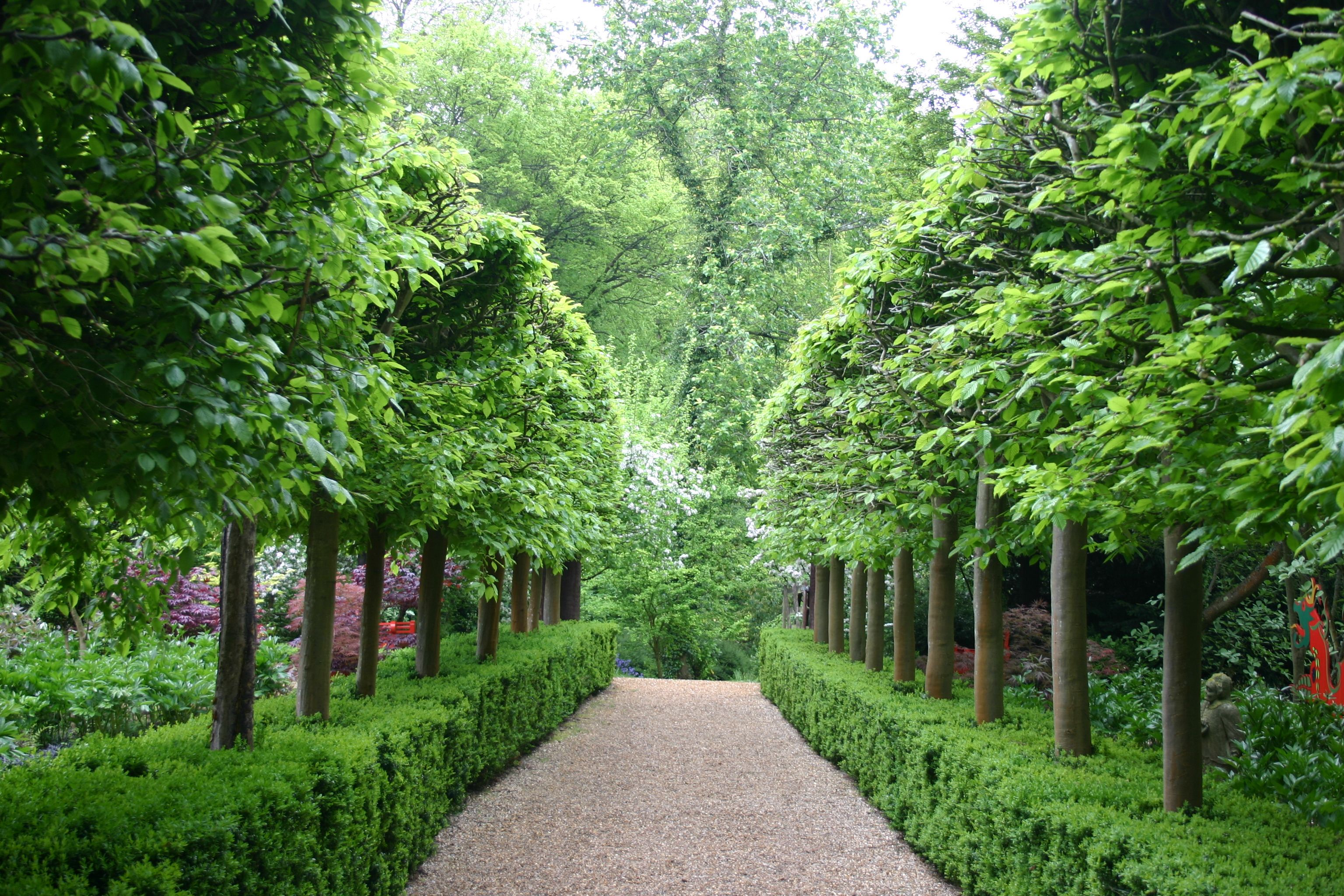 Marylyn Abbott West Green House Hampshire Pleached Hornbeam Avenue Underplanted With Box